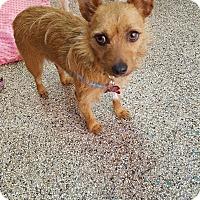 Adopt A Pet :: Cashew - Thousand Oaks, CA