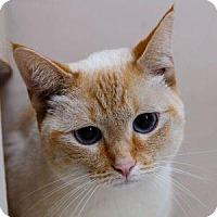 Adopt A Pet :: PEACHES - Decatur, GA