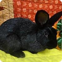 Adopt A Pet :: Sarah - Portland, OR