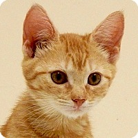 Adopt A Pet :: Mila - Long Beach, NY