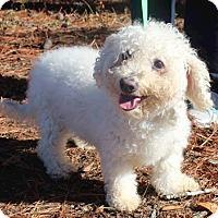 Adopt A Pet :: Zoey - Brownsboro, AL