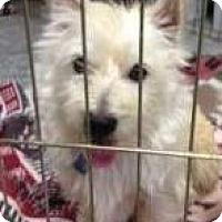 Adopt A Pet :: Peppermint Patty - Omaha, NE