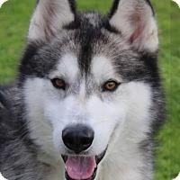 Adopt A Pet :: KAZAN - Red Bluff, CA