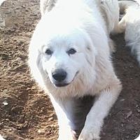 Adopt A Pet :: Zeus #5 - Graceville, FL
