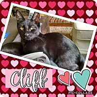 Adopt A Pet :: Cliff - Keller, TX