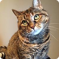 Adopt A Pet :: Anika - Wayne, NJ