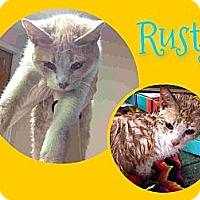 Adopt A Pet :: Rusty - Washington, DC