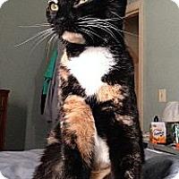 Adopt A Pet :: Angelina - Raritan, NJ