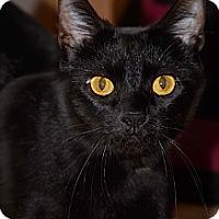 Adopt A Pet :: Elsa - Troy, OH