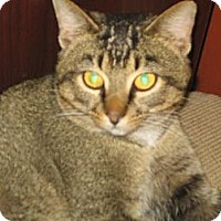 Adopt A Pet :: Lemur - Hilham, TN