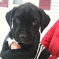 Adopt A Pet :: Bessie - Hadley, MI