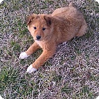 Adopt A Pet :: Kanga - Albany, NY