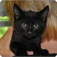 Adopt A Pet :: Seth - Monroe, GA