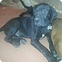 Adopt A Pet :: Royal - New orleans, LA