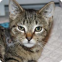 Adopt A Pet :: Baxter (LE) - Little Falls, NJ