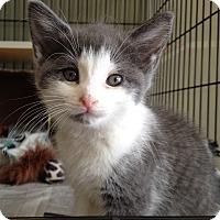 Adopt A Pet :: Frannie - Island Park, NY