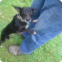 Adopt A Pet :: Teena - Kendall, NY
