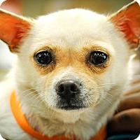 Adopt A Pet :: Antoinette - Gainesville, FL