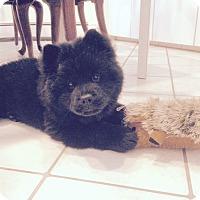 Adopt A Pet :: ARIA - Dix Hills, NY