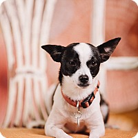 Adopt A Pet :: Priscilla - Portland, OR