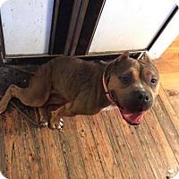 Adopt A Pet :: Baden - Cantonment, FL
