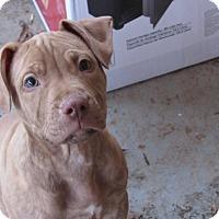 Adopt A Pet :: Caramel - Broken Arrow, OK