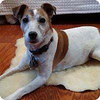 Adopt A Pet :: Penny in Austin - Austin, TX