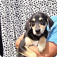 Adopt A Pet :: Zodiac - Oviedo, FL