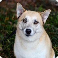 Adopt A Pet :: GINGER - READ HER SAD STORY - Franklin, TN