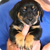 Adopt A Pet :: Emily Dickinson~adopted! - Glastonbury, CT