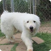 Adopt A Pet :: Polar  *Adopted - Tulsa, OK