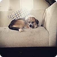 Adopt A Pet :: Della - Upper Sandusky, OH