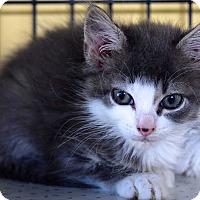 Adopt A Pet :: Bubba - Island Park, NY