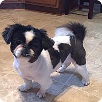 Adopt A Pet :: Bell - LEXINGTON, KY