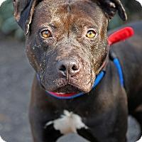 Adopt A Pet :: Stover - Berkeley, CA