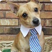Adopt A Pet :: Andy - Benbrook, TX
