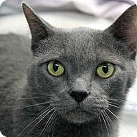 Adopt A Pet :: Persephone - Indianapolis, IN