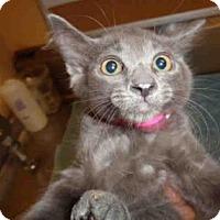 Adopt A Pet :: ELIZA - Fountain Hills, AZ
