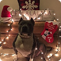 Adopt A Pet :: Laia - Baltimore, MD