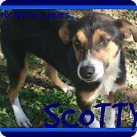 Adopt A Pet :: SCOTTY - Manchester, NH