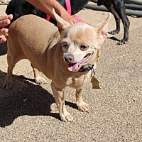 Adopt A Pet :: Cocoa Puff - Creston, CA