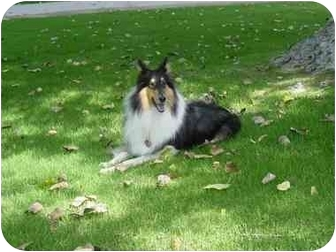 Collie Dog for adoption in San Diego, California - Boo