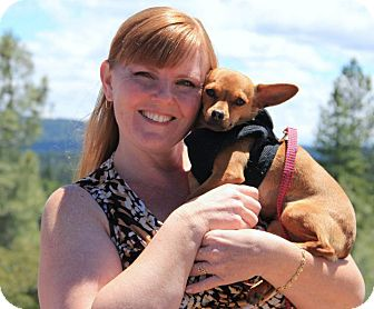 Chihuahua/Miniature Pinscher Mix Dog for adoption in Grass Valley, California - Rose