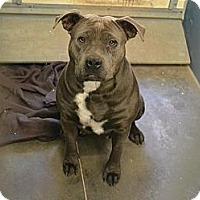 Adopt A Pet :: Gorda - Scottsdale, AZ