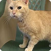 Adopt A Pet :: Red - Medina, OH