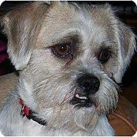 Adopt A Pet :: Oliver - Rigaud, QC