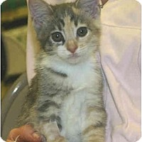 Adopt A Pet :: Arly - Irvine, CA