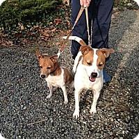 Adopt A Pet :: Isaac - Rhinebeck, NY