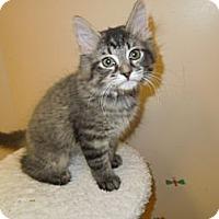 Adopt A Pet :: Truffles - Medina, OH