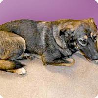 Adopt A Pet :: Melanie needs foster now - Sacramento, CA